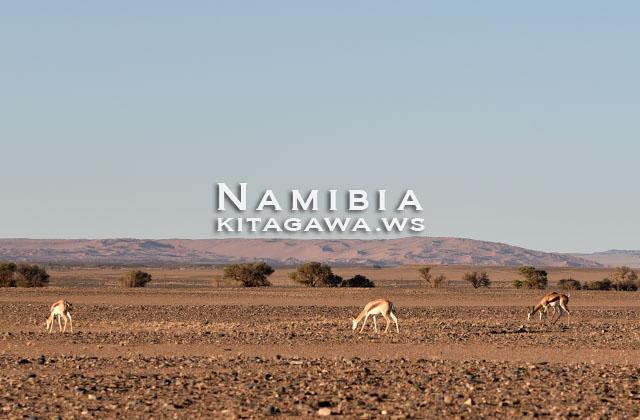 ナミブ砂漠 旅行記