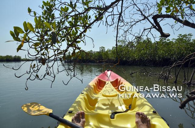 ギニアビサウのマングローブ林をカヌーで探検