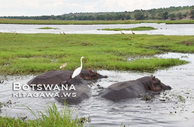 ボツワナ旅行記 チョベ国立公園ボートサファリ