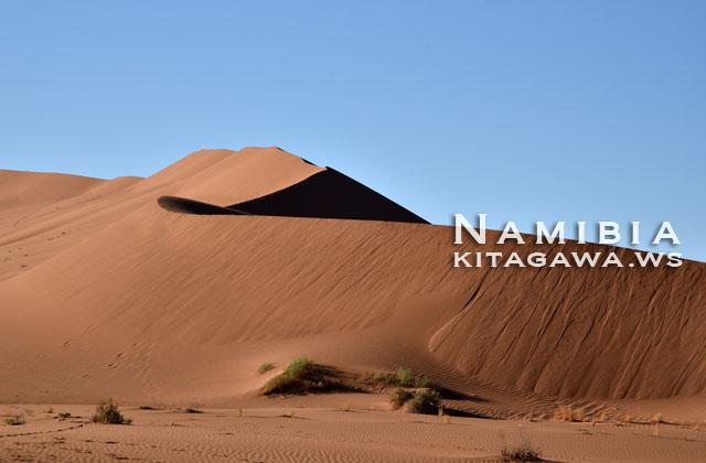 ナミブ砂漠 ビッグダディ