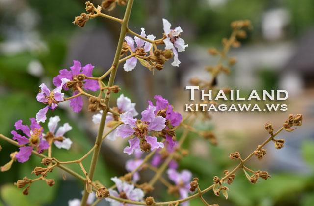 タイ旅行記ブログ
