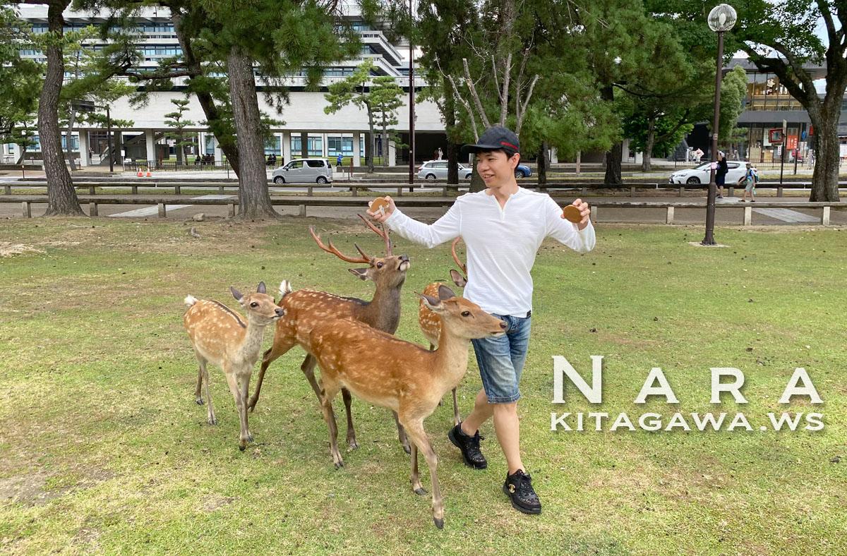奈良公園の鹿さん