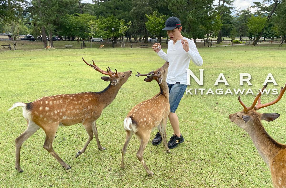 奈良旅行記ブログ